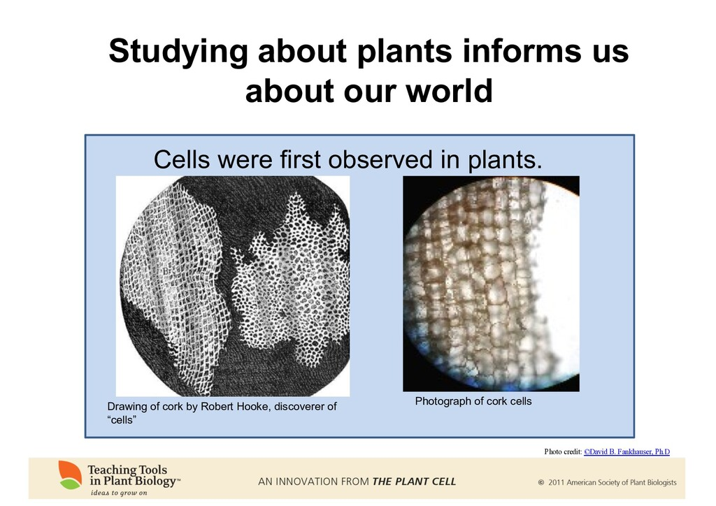 Studying about plants informs us about our worl...