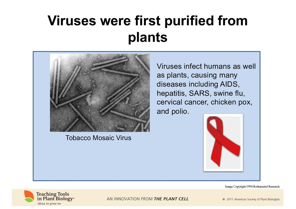 Viruses were first purified from plants Tobacco...