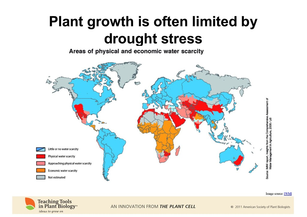 Plant growth is often limited by drought stress...