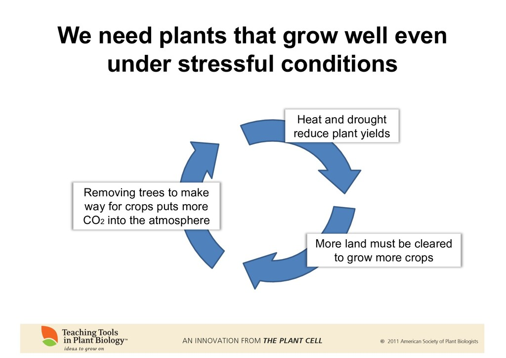 We need plants that grow well even under stress...
