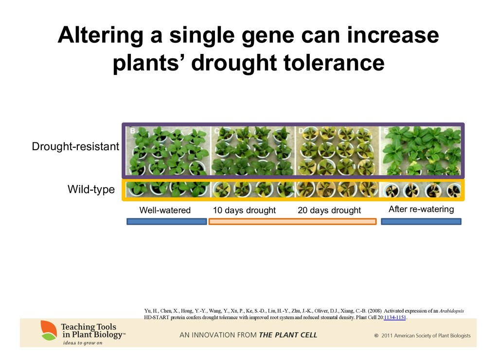 Altering a single gene can increase plants' dro...