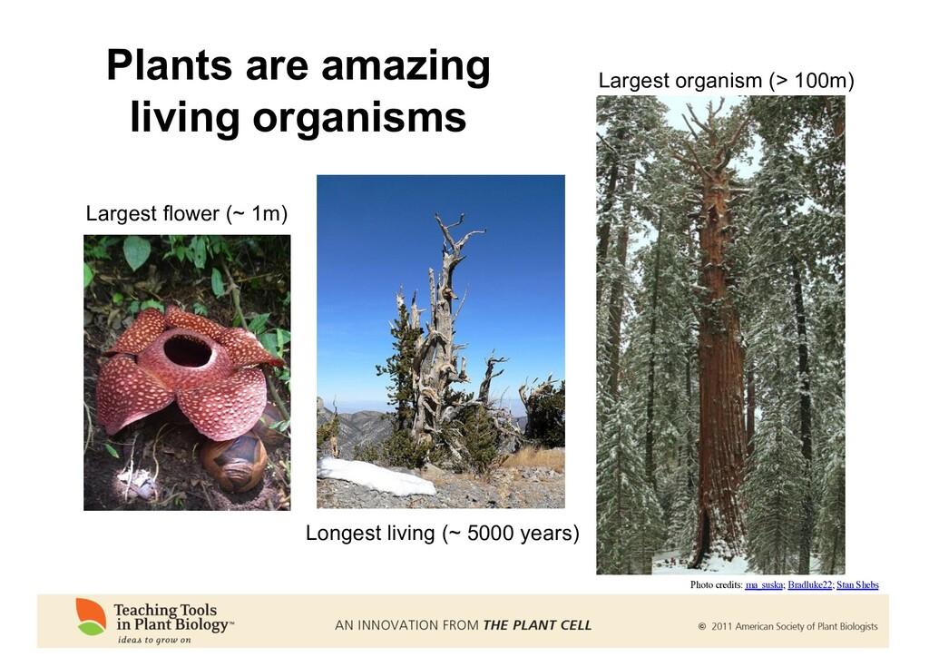 Plants are amazing living organisms Largest flo...