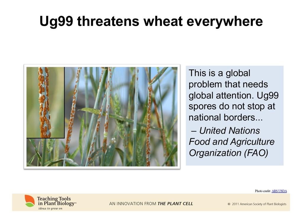 Ug99 threatens wheat everywhere This is a globa...