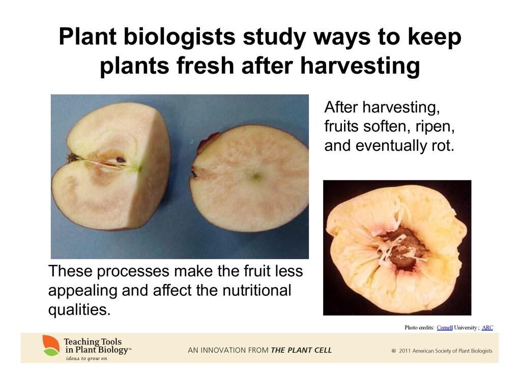 Plant biologists study ways to keep plants fres...