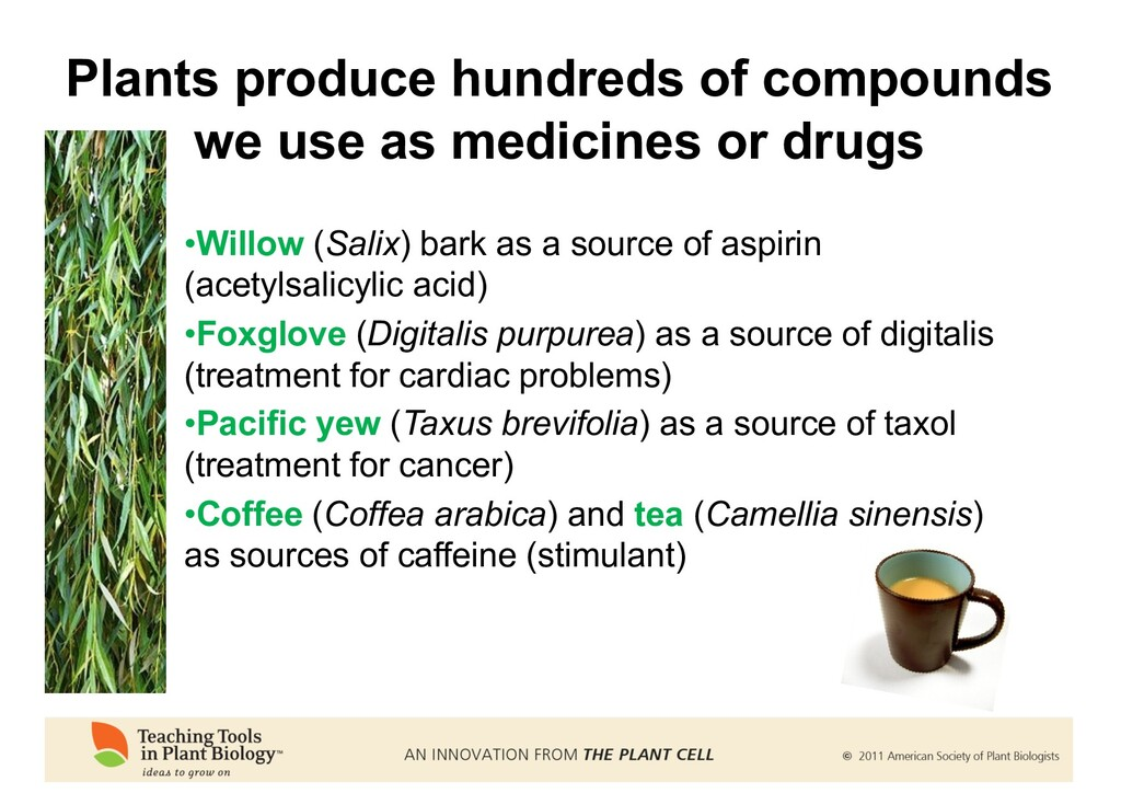 Plants produce hundreds of compounds we use as ...