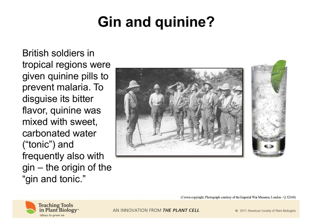 Gin and quinine? (Crown copyright; Photograph c...