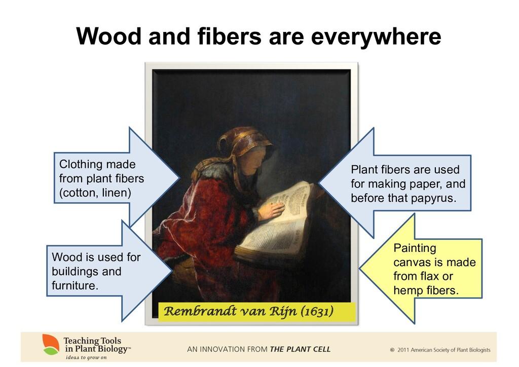 Wood and fibers are everywhere Rembrandt van Ri...