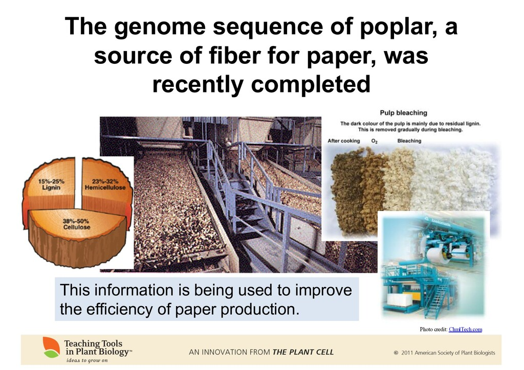 The genome sequence of poplar, a source of fibe...