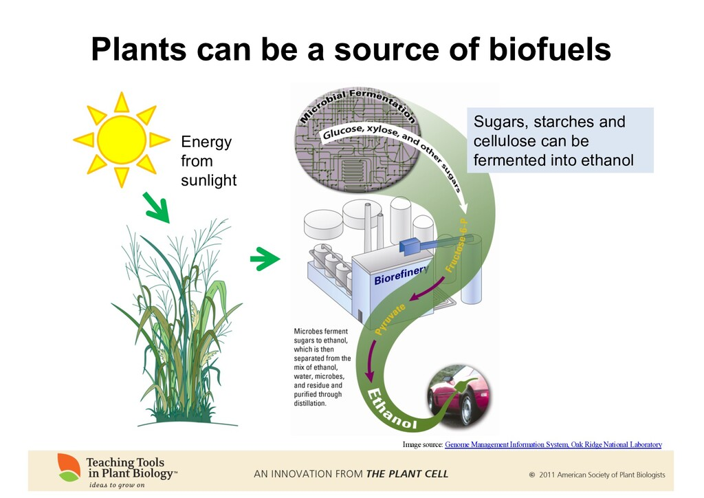 Plants can be a source of biofuels Energy from ...