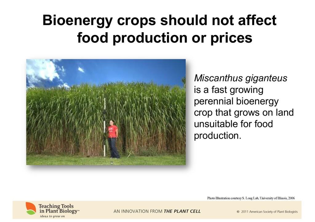 Bioenergy crops should not affect food producti...