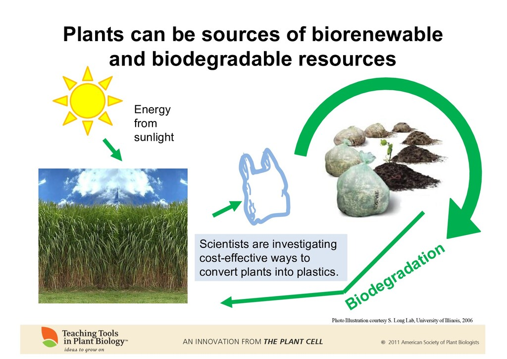 Energy from sunlight Biodegradation Plants can ...