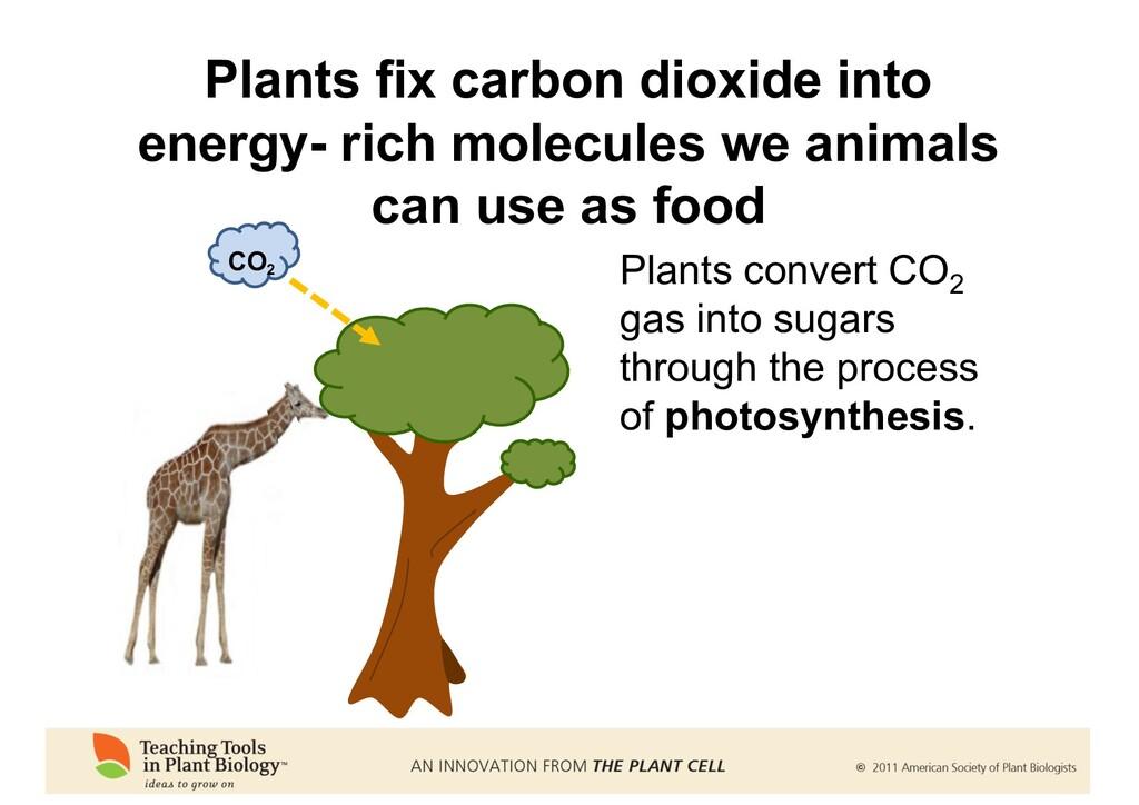 Plants fix carbon dioxide into energy- rich mol...
