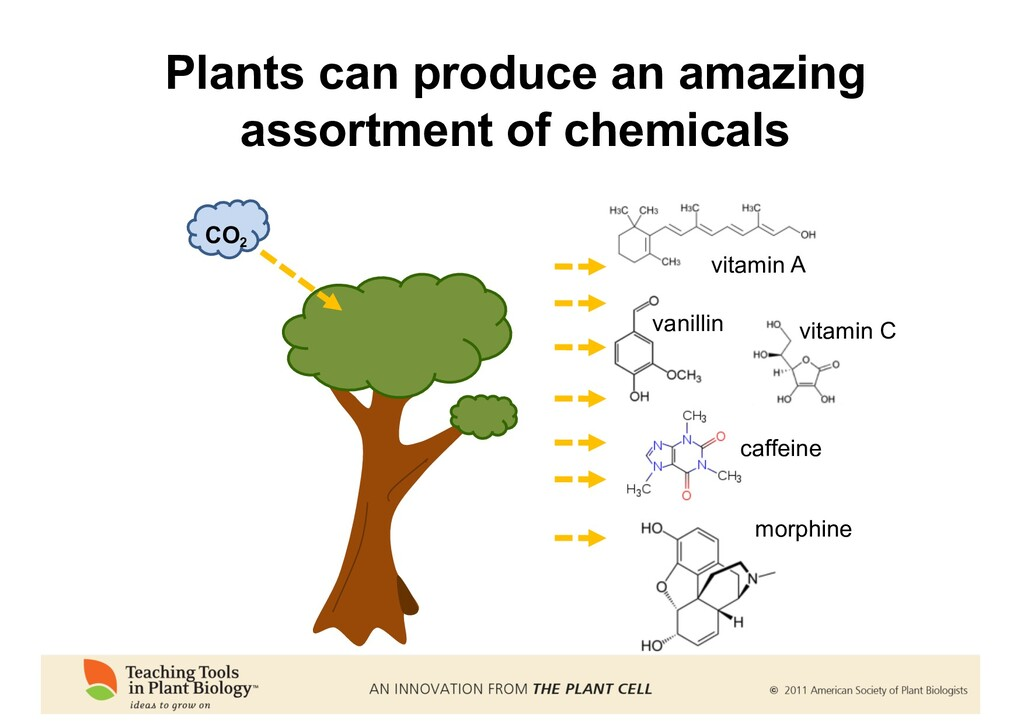 Plants can produce an amazing assortment of che...