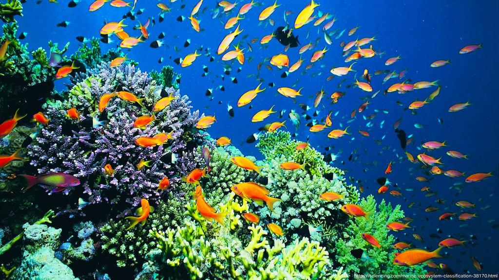 """https://sciencing.com/marine-ecosystem-classi""""c..."""