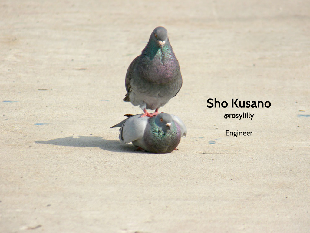 Sho Kusano @rosylilly Engineer