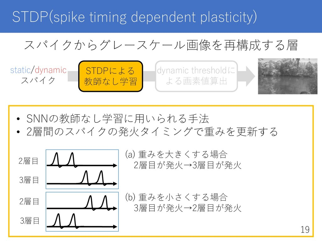 STDP(spike timing dependent plasticity) スパイクからグ...
