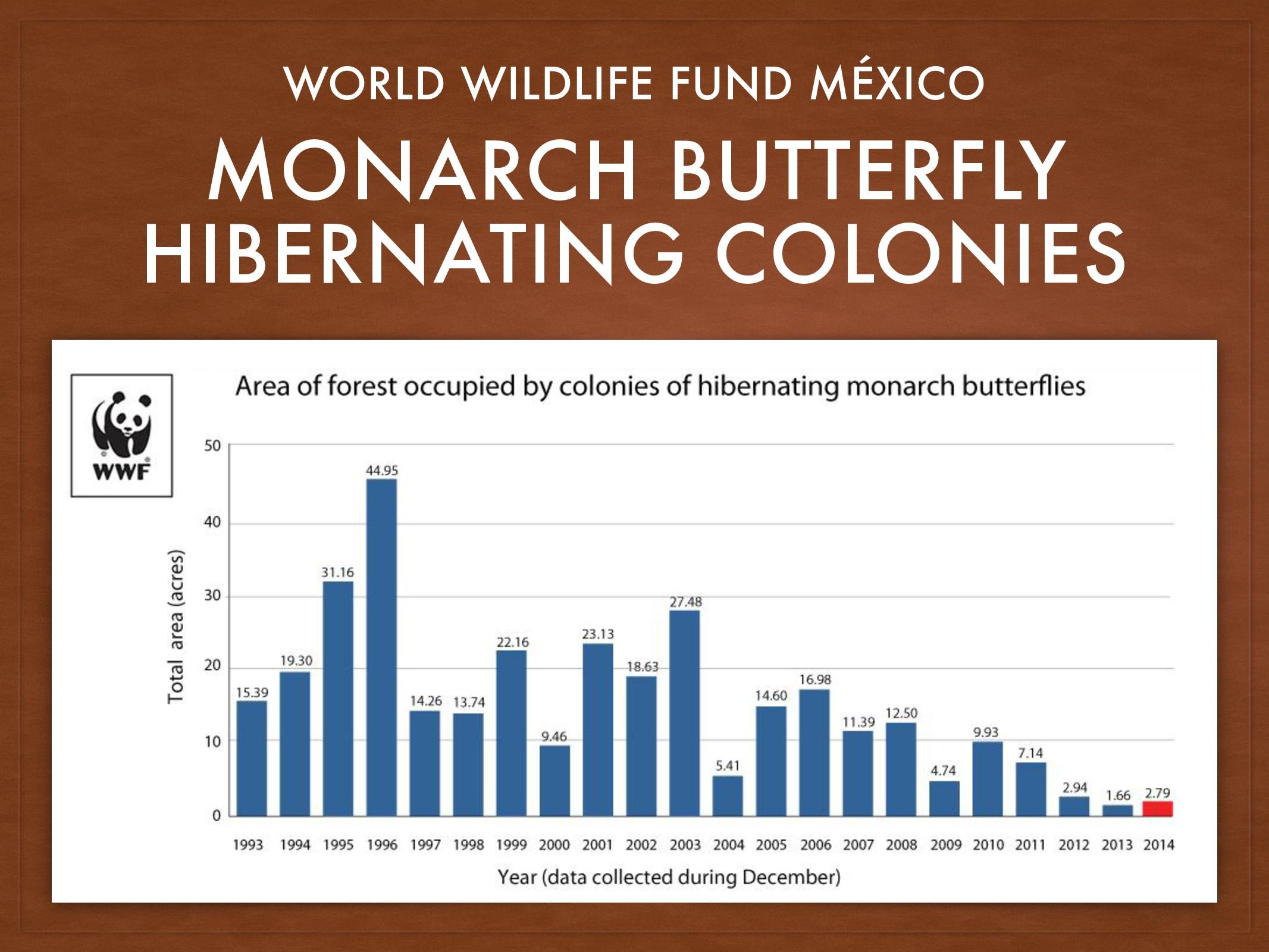 MONARCH BUTTERFLY HIBERNATING COLONIES WORLD WI...