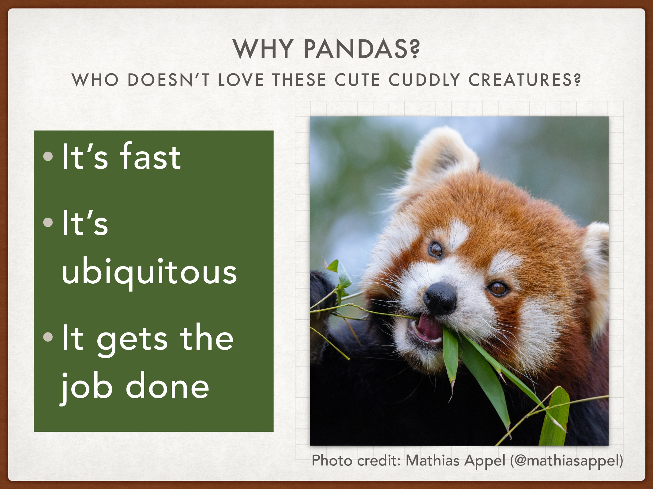 WHO DOESN'T LOVE THESE CUTE CUDDLY CREATURES? W...
