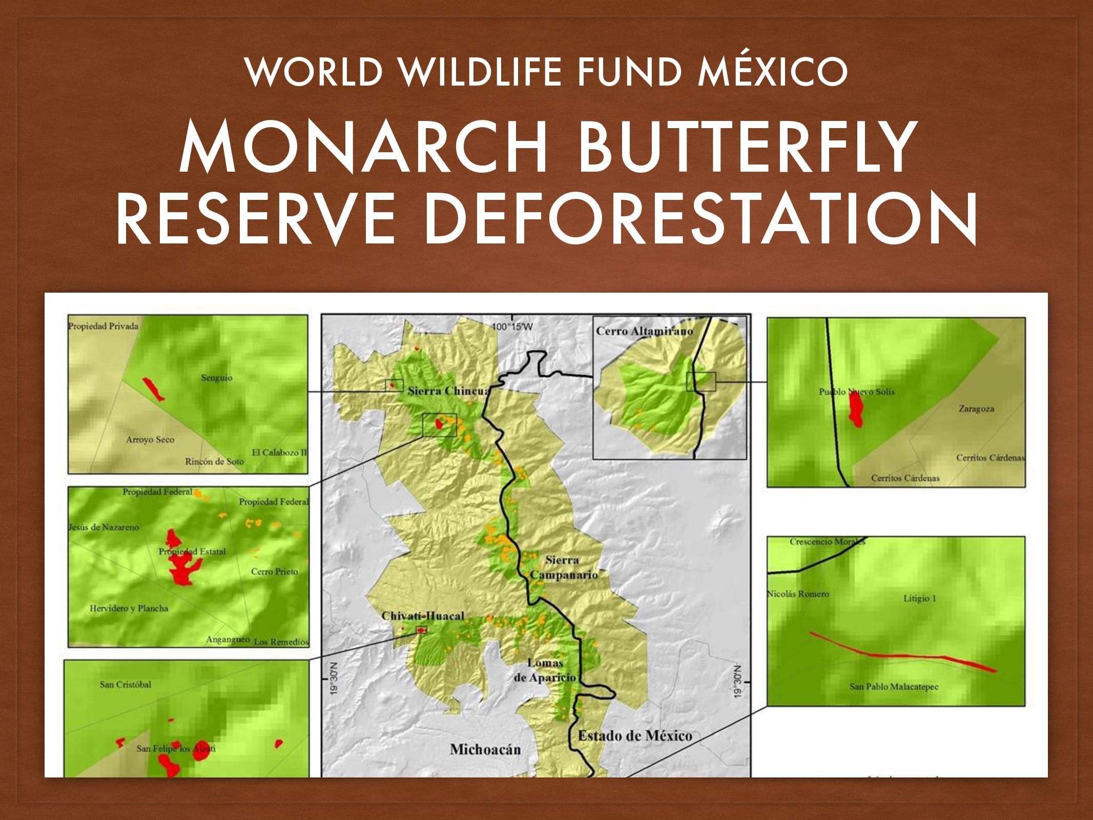 MONARCH BUTTERFLY RESERVE DEFORESTATION WORLD W...