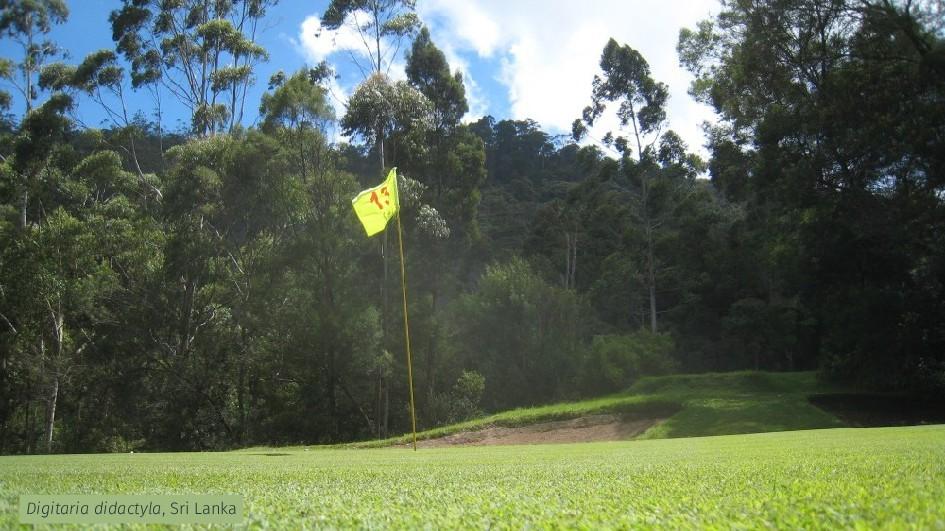 Digitaria didactyla, Sri Lanka