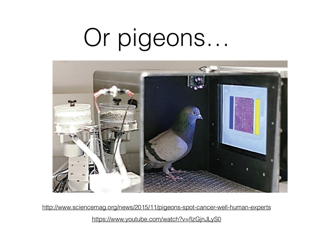 Or pigeons… http://www.sciencemag.org/news/2015...