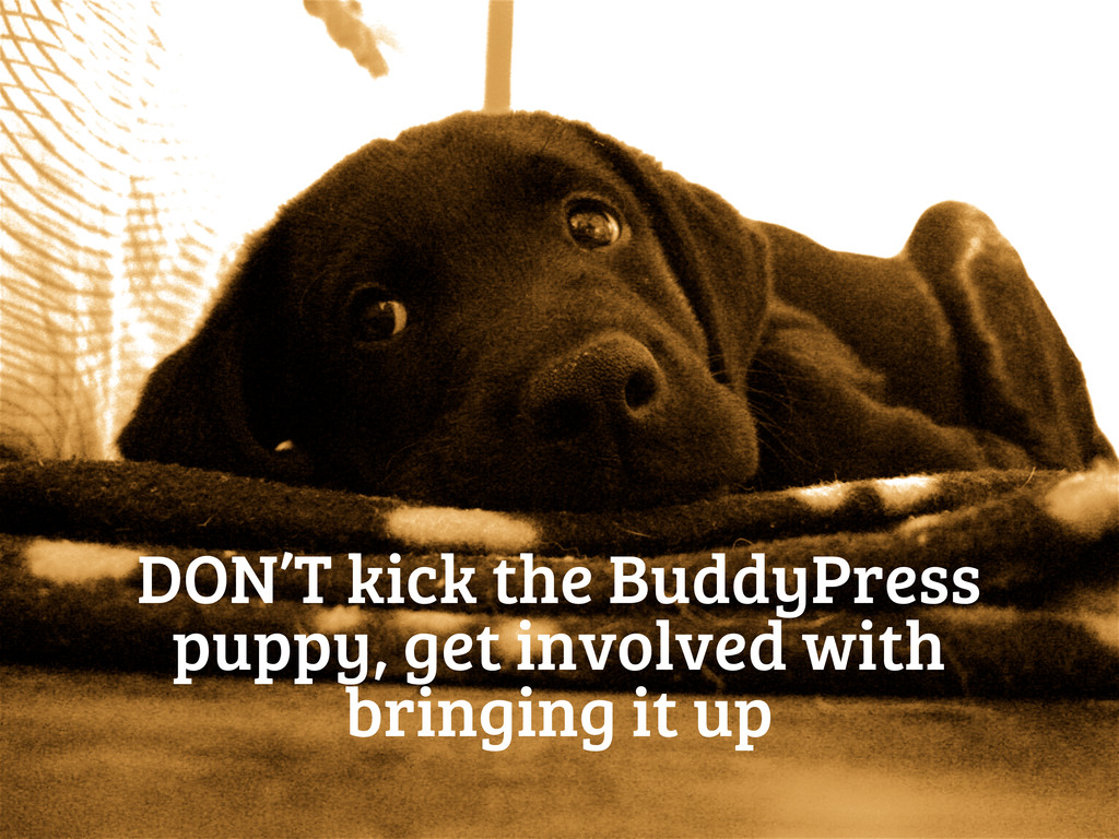 DON'T kick the BuddyPress puppy, get involved w...