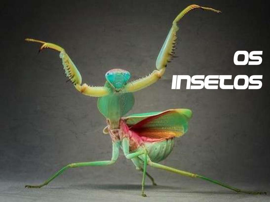 Os insetos