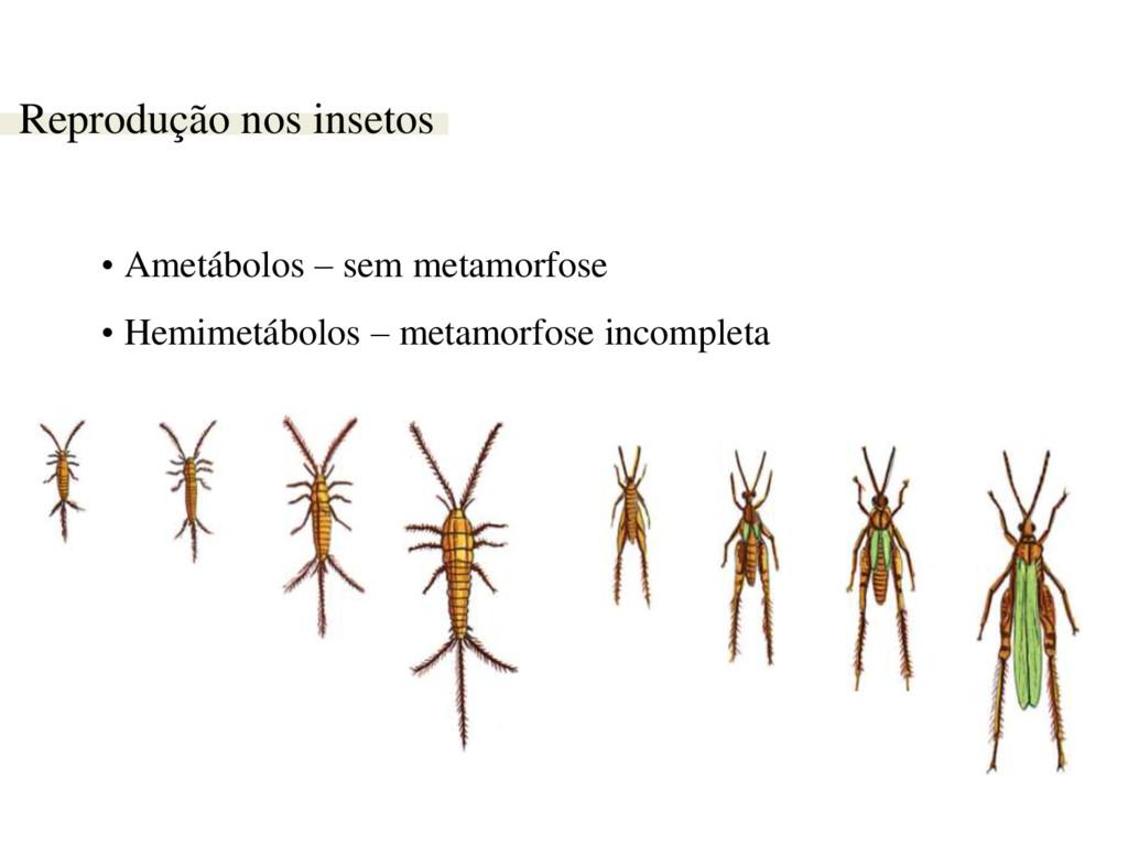 Reprodução nos insetos • Ametábolos – sem metam...