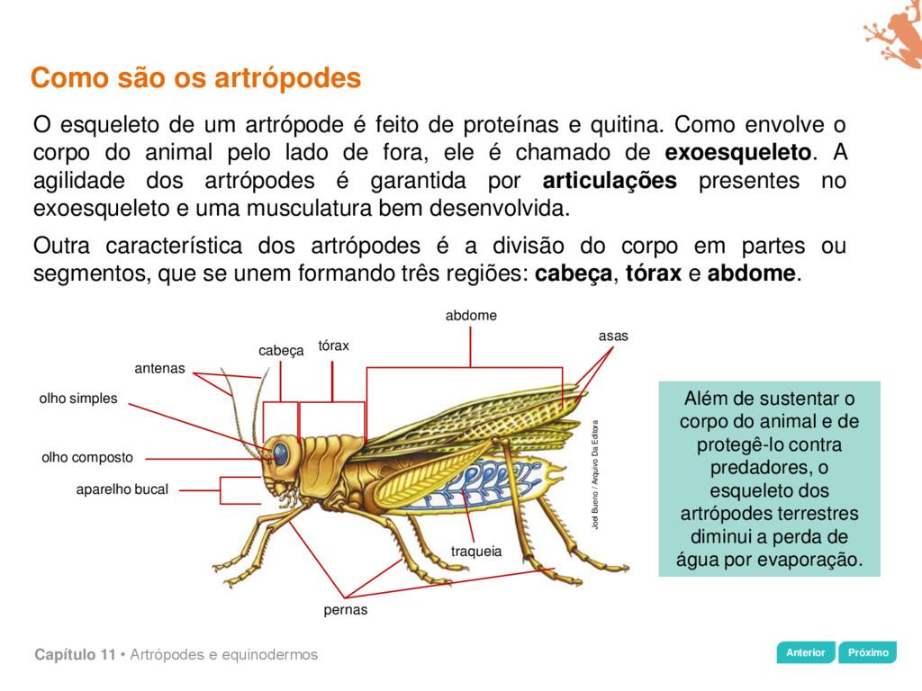Capítulo 11 • Artrópodes e equinodermos Como sã...