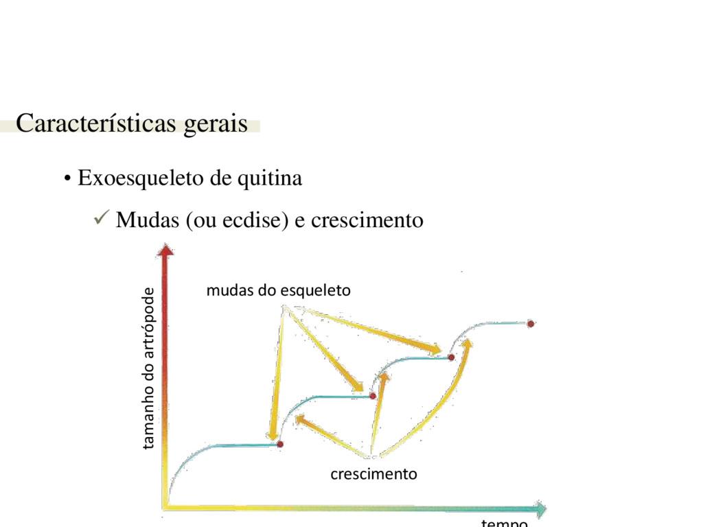 Características gerais • Exoesqueleto de quitin...
