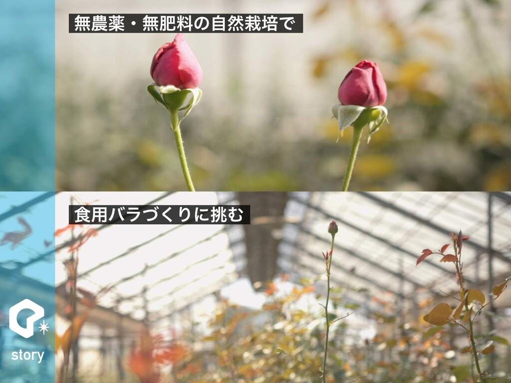 story ແༀɾແංྉͷࣗવഓͰ ৯༻όϥͮ͘ΓʹΉ