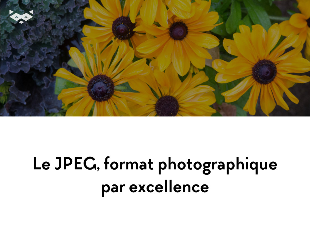 Le JPEG, format photographique par excellence