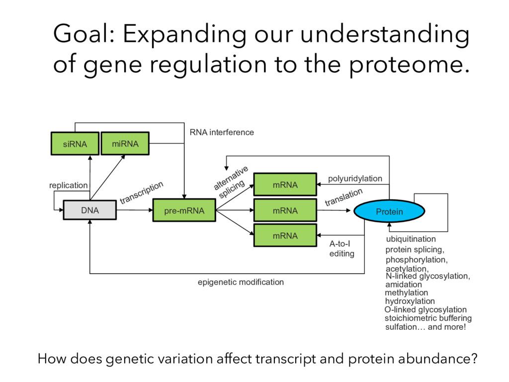 DNA pre-mRNA Protein mRNA mRNA mRNA miRNA polyu...