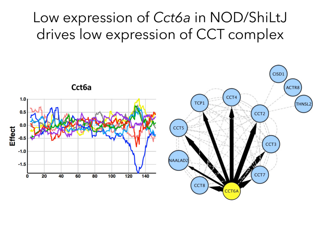 Cct6a Low expression of Cct6a in NOD/ShiLtJ dri...