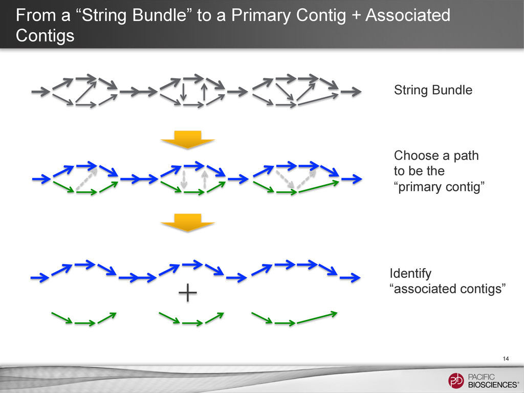 """From a """"String Bundle"""" to a Primary Contig + As..."""