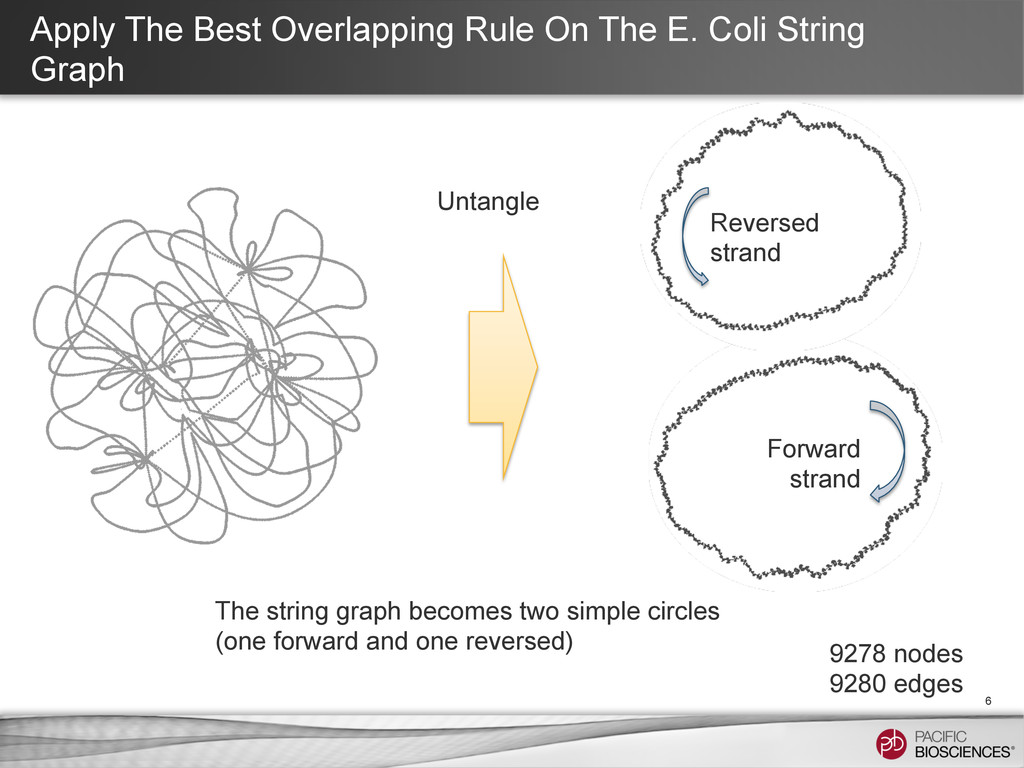Apply The Best Overlapping Rule On The E. Coli ...