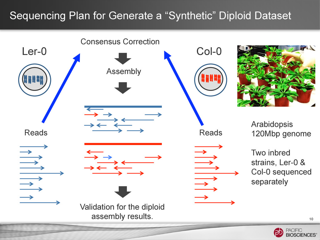 """Sequencing Plan for Generate a """"Synthetic"""" Dipl..."""