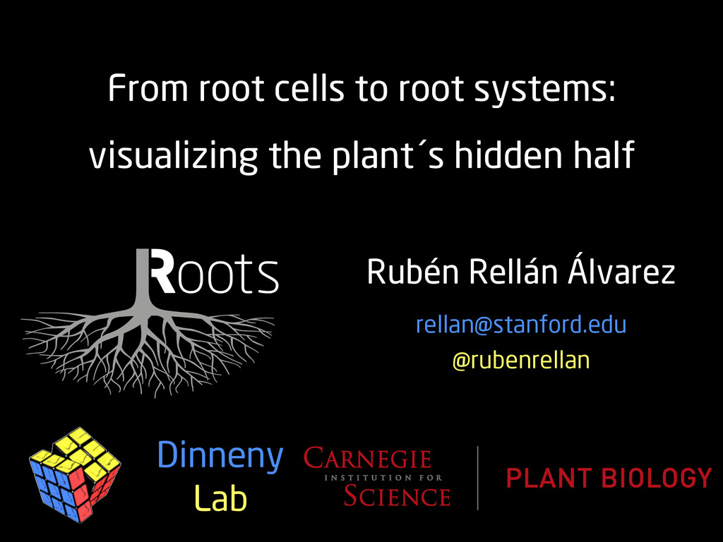 Rubén Rellán Álvarez From root cells to root sy...