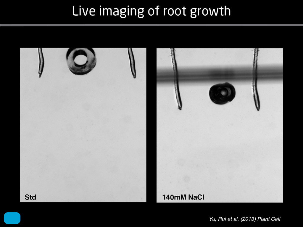Live imaging of root growth Yu, Rui et al. (201...