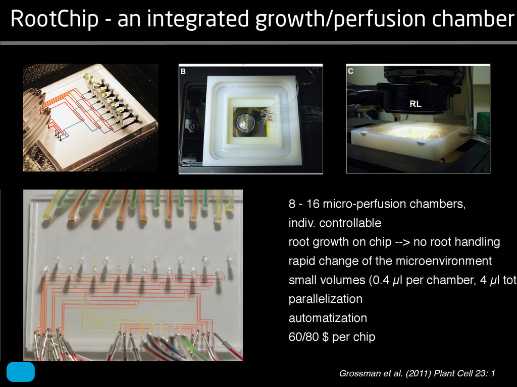 RootChip - an integrated growth/perfusion chamb...