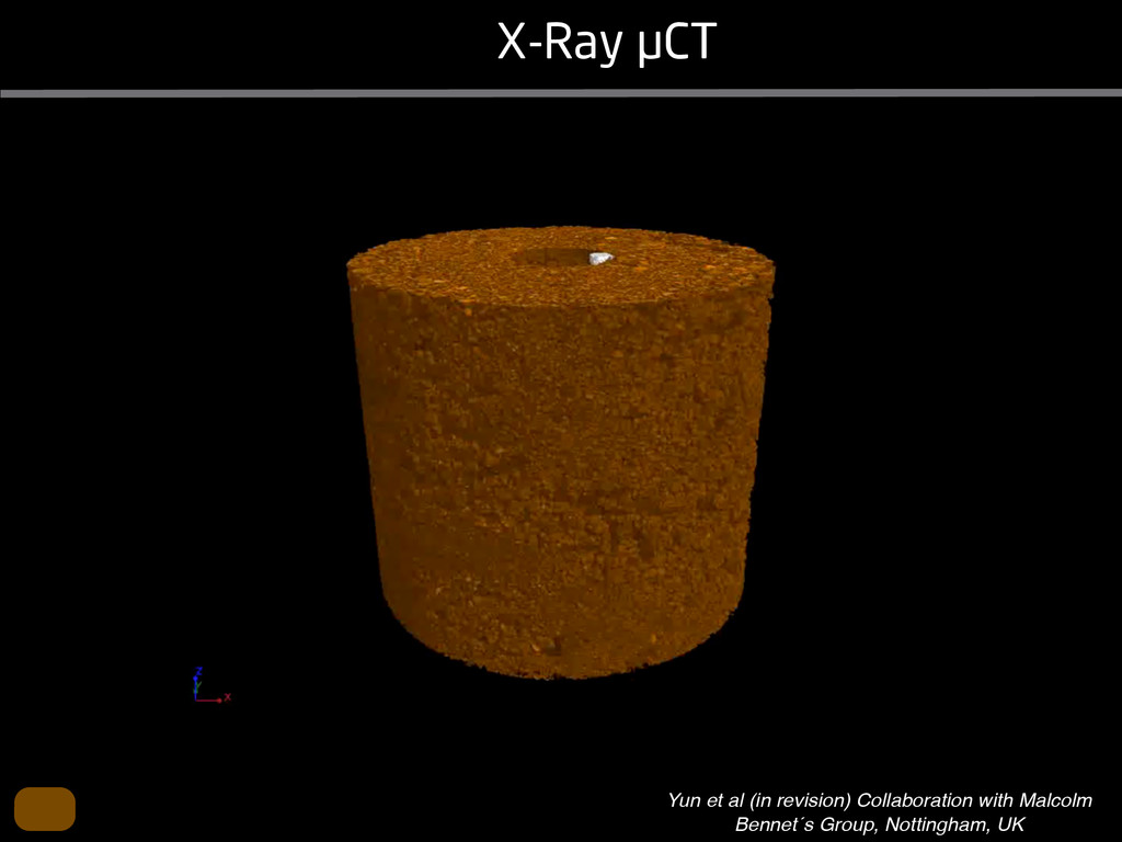 X-Ray µCT Yun et al (in revision) Collaboration...