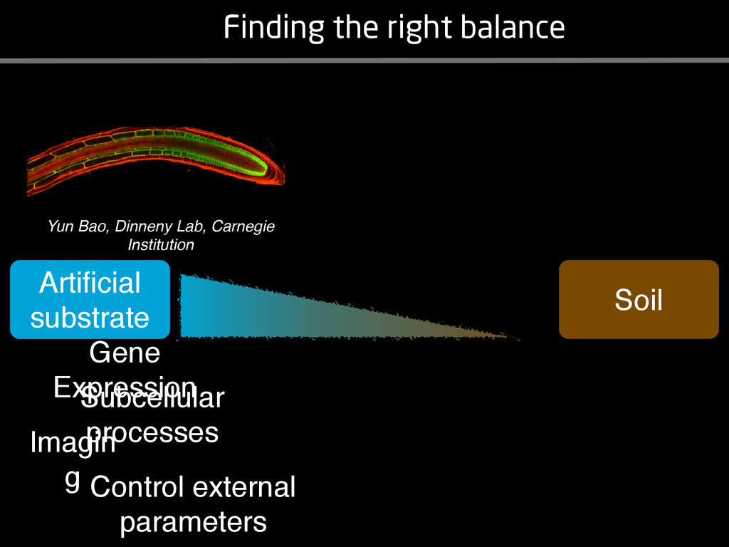 Finding the right balance Artificial substrate S...