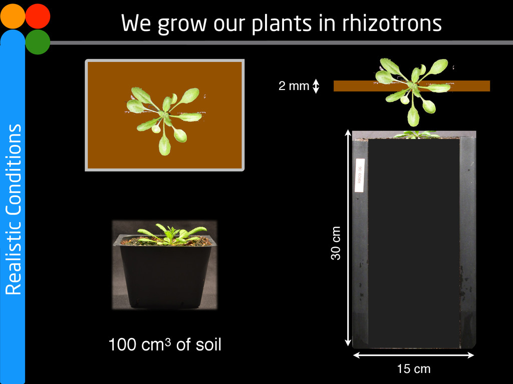 Realistic Conditions We grow our plants in rhiz...