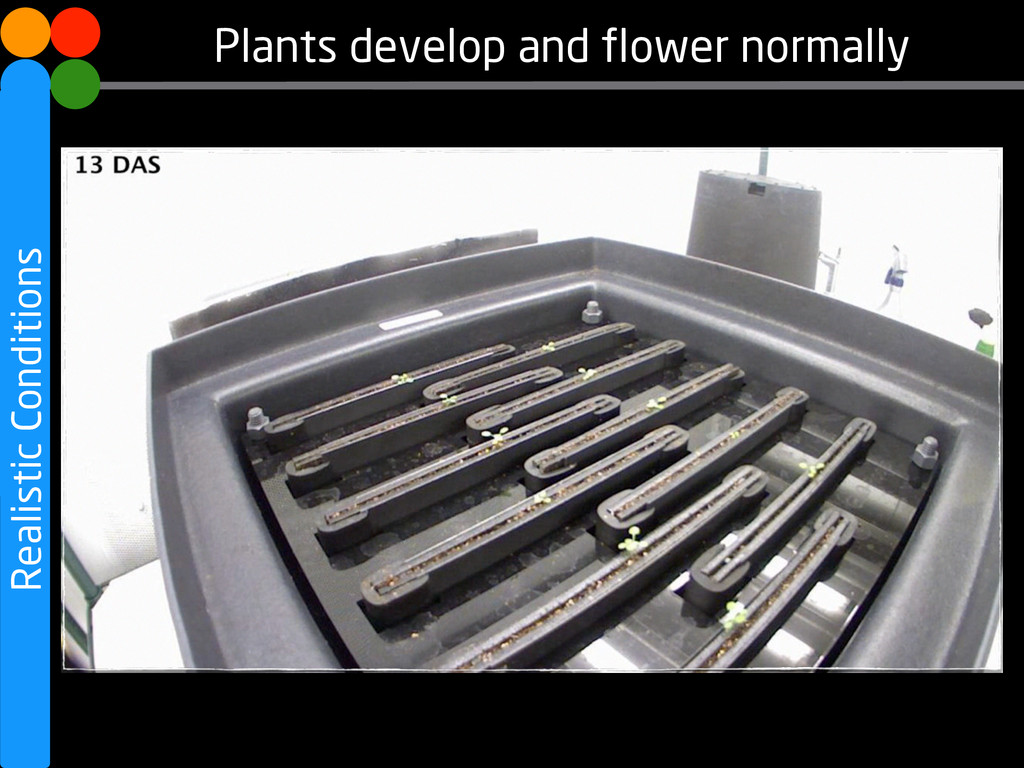 Realistic Conditions Plants develop and flower ...