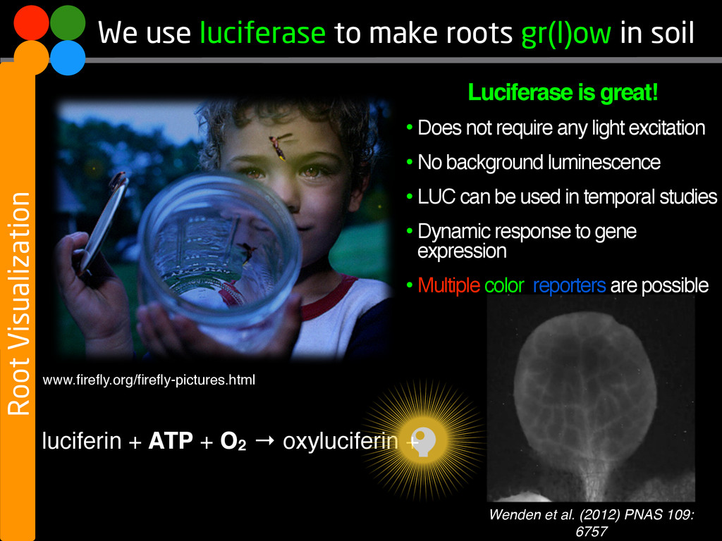 We use luciferase to make roots gr(l)ow in soil...