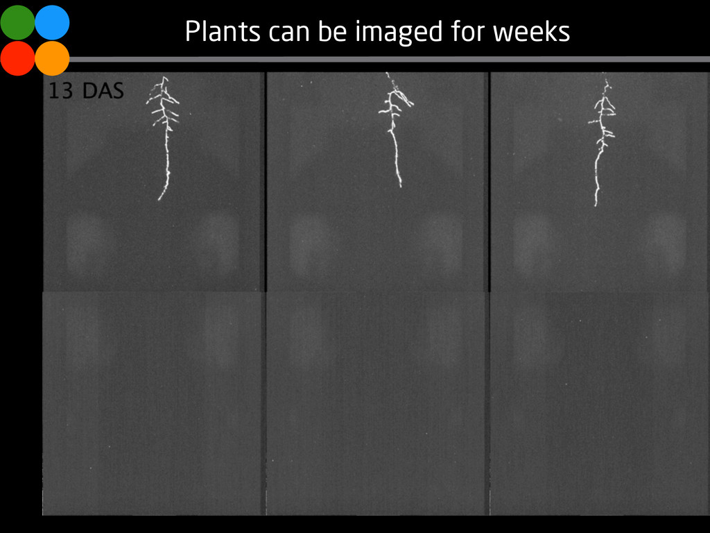 Plants can be imaged for weeks