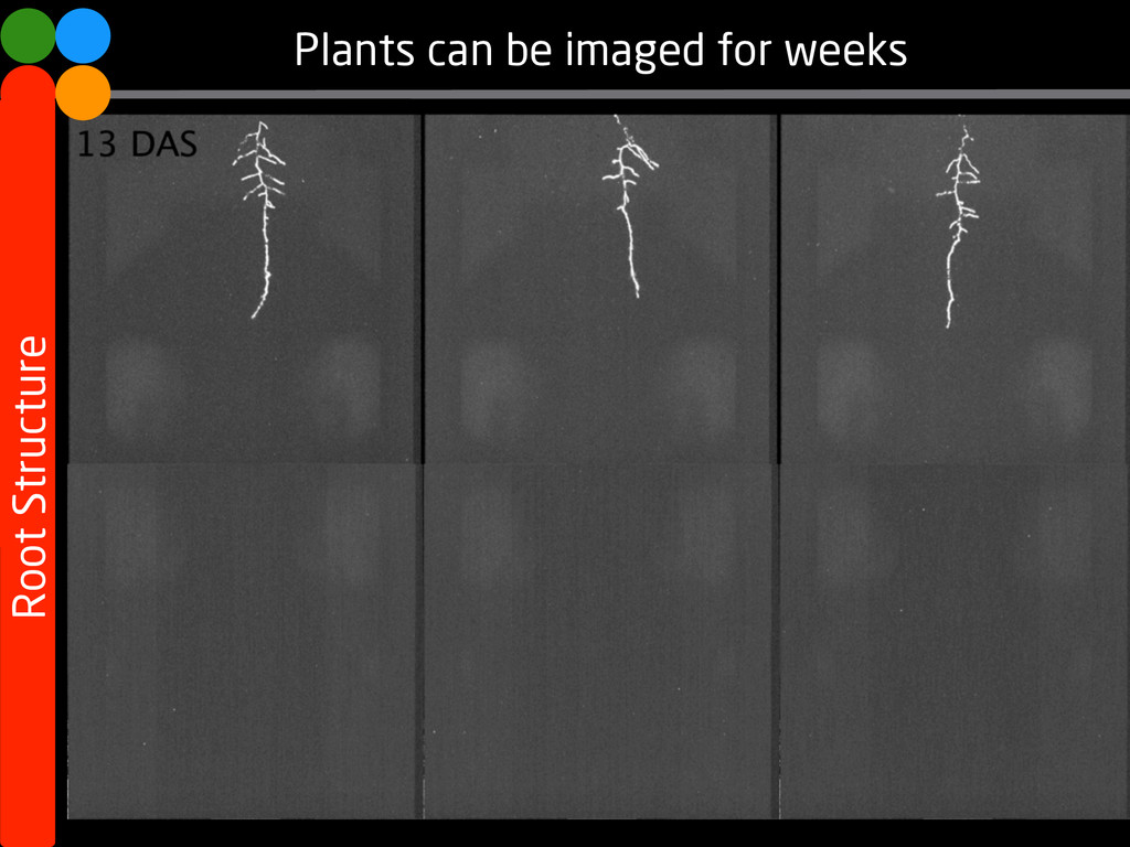 Root Structure Plants can be imaged for weeks