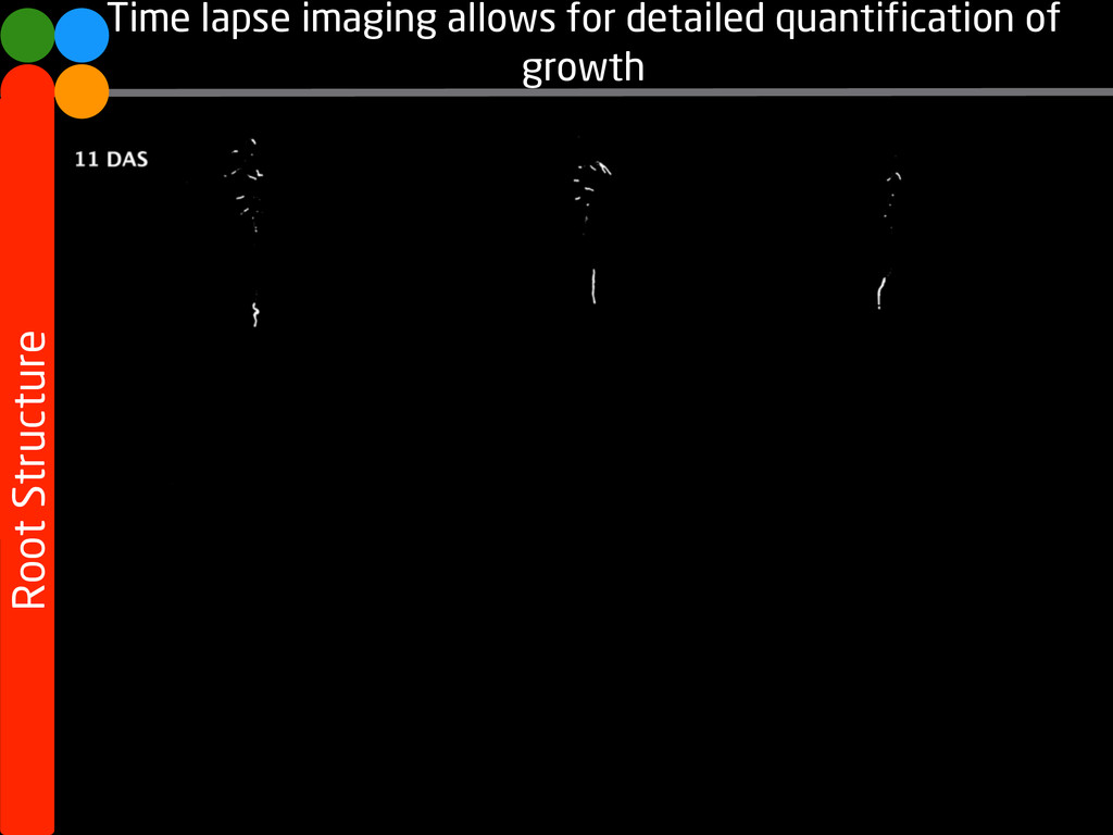 Time lapse imaging allows for detailed quantifi...