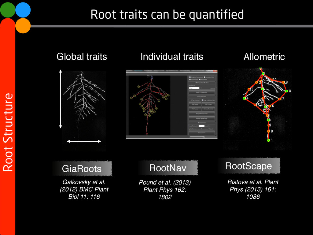 Root traits can be quantified Root Structure Ga...