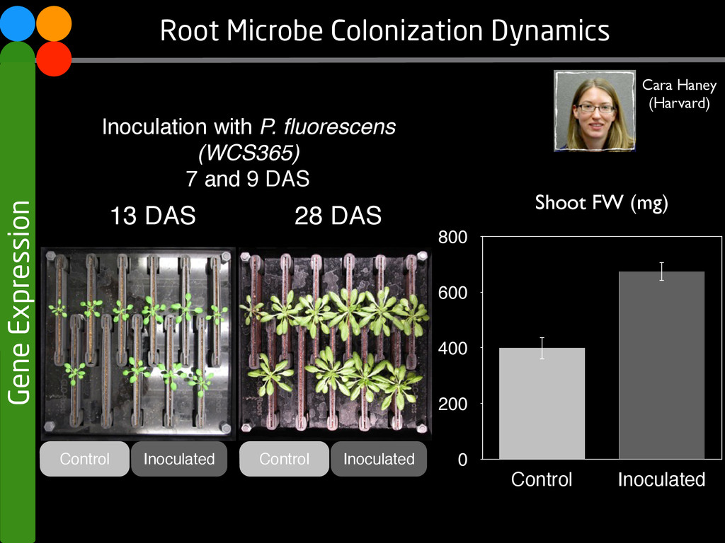 13 DAS 28 DAS Root Microbe Colonization Dynamic...